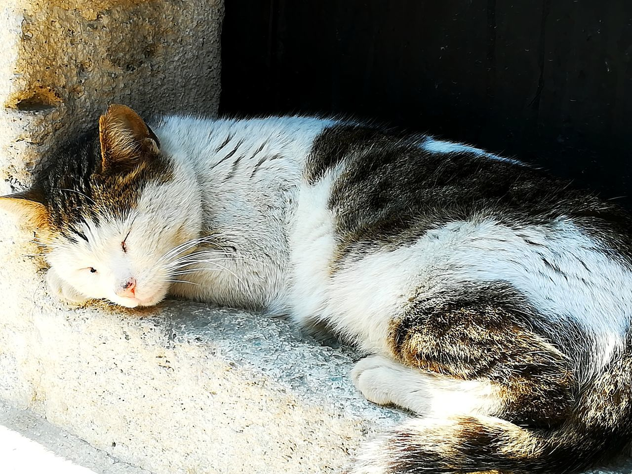 domestic cat, pets, animal themes, domestic animals, one animal, mammal, feline, sleeping, relaxation, lying down, no people, whisker, indoors, day, close-up