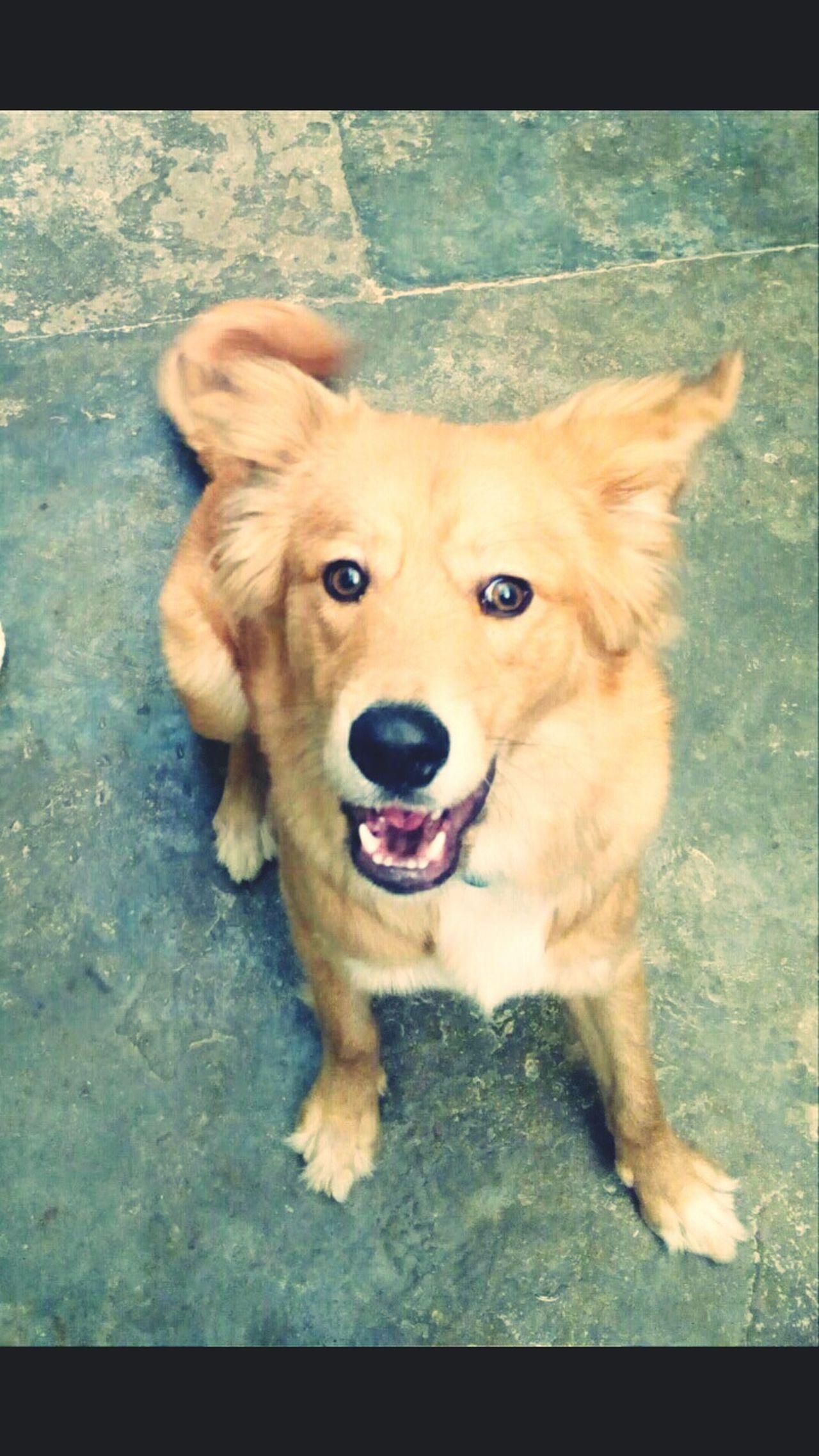 Yogui Happydogs