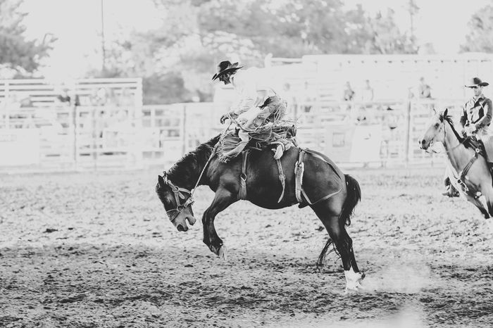 Rodeo Wild West Shows Animal Themes Bucking Broncos Day Domestic Animals Field Focus On Foreground Horse Horse Photography  Livestock Mammal Nature No People One Animal Outdoors Running Sky
