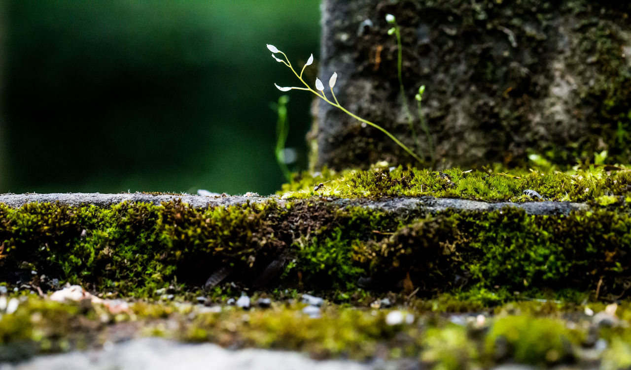 Animal Themes Beauty In Nature Close-up Day Fragility Freshness Green Color Growth Leaf Moss Nature No People Outdoors Plant Selective Focus