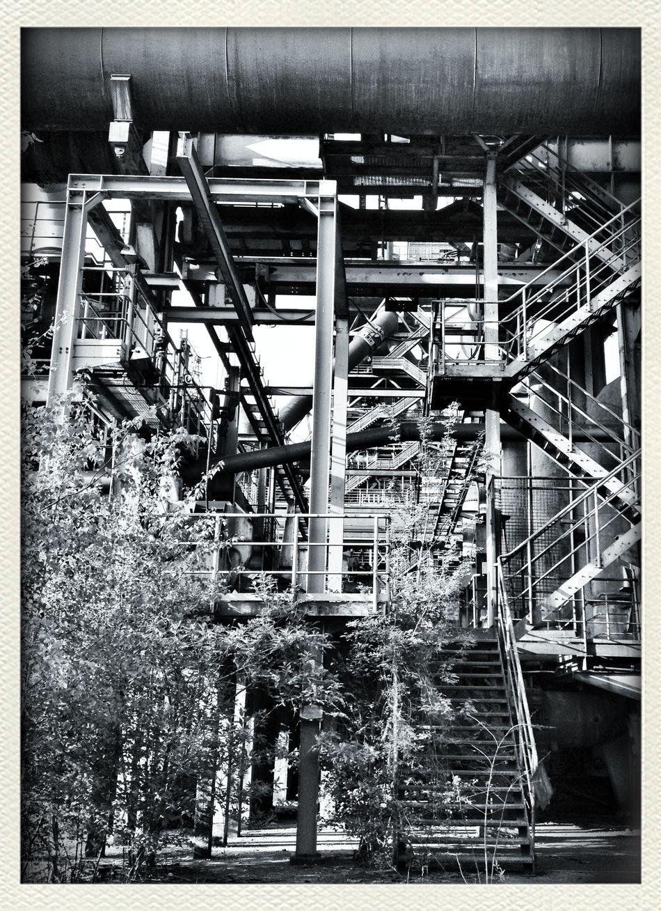 new lost world (pic 3) Geknürzel Blackandwhite TheMinimals (less Edit Juxt Photography) Vintage Adventure