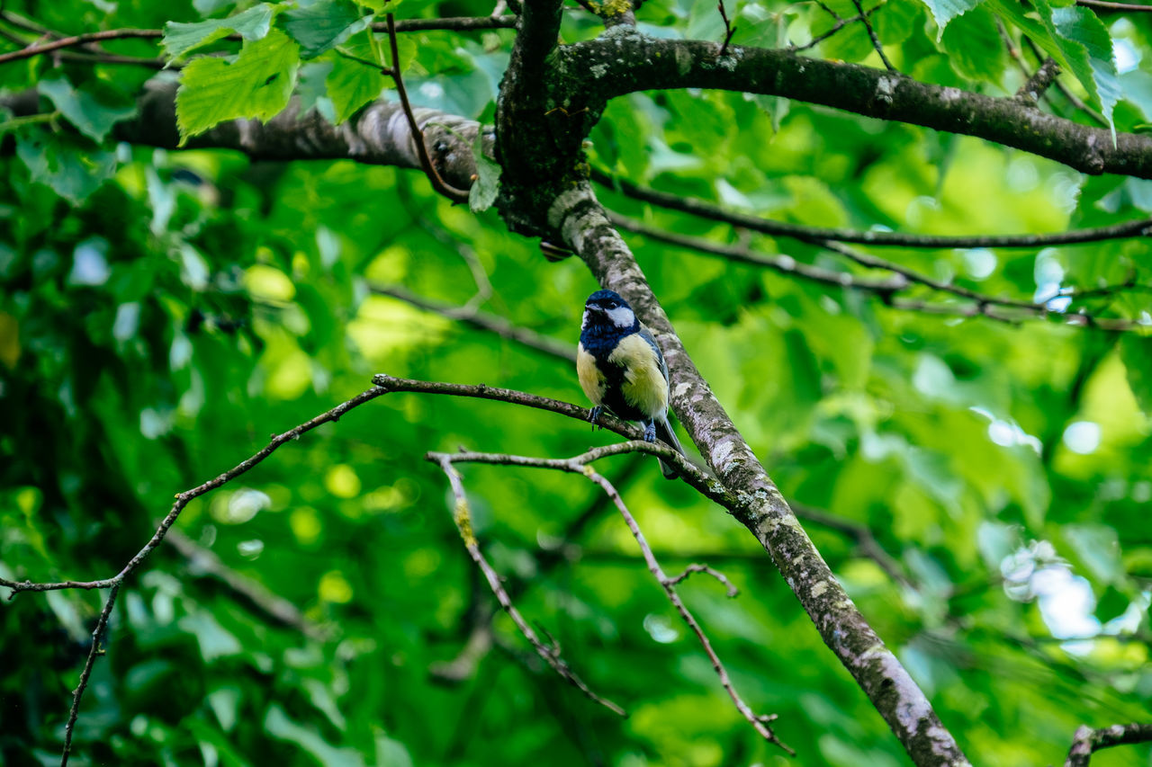 Animal Themes Animal Wildlife Animals In The Wild Beauty In Nature Bird Branch Close-up Day Focus On Foreground Green Color Growth Leaf Nature No People One Animal Outdoors Perching Tree