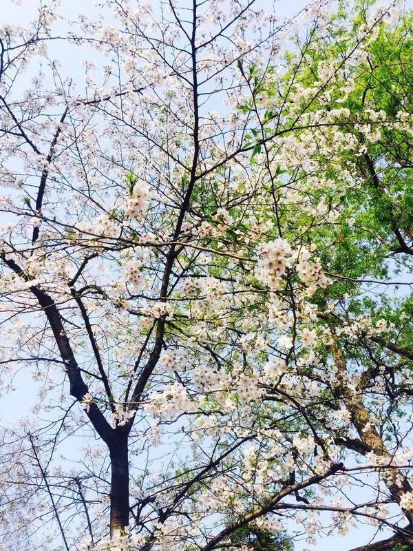 樱花三月🌸🌿 First Eyeem Photo