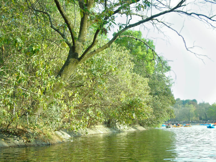 Mexico City Chapultepec Lake Tree Green Color Water Nature River Outdoors Day No People Beauty In Nature Sunlight Forest Sky Branch