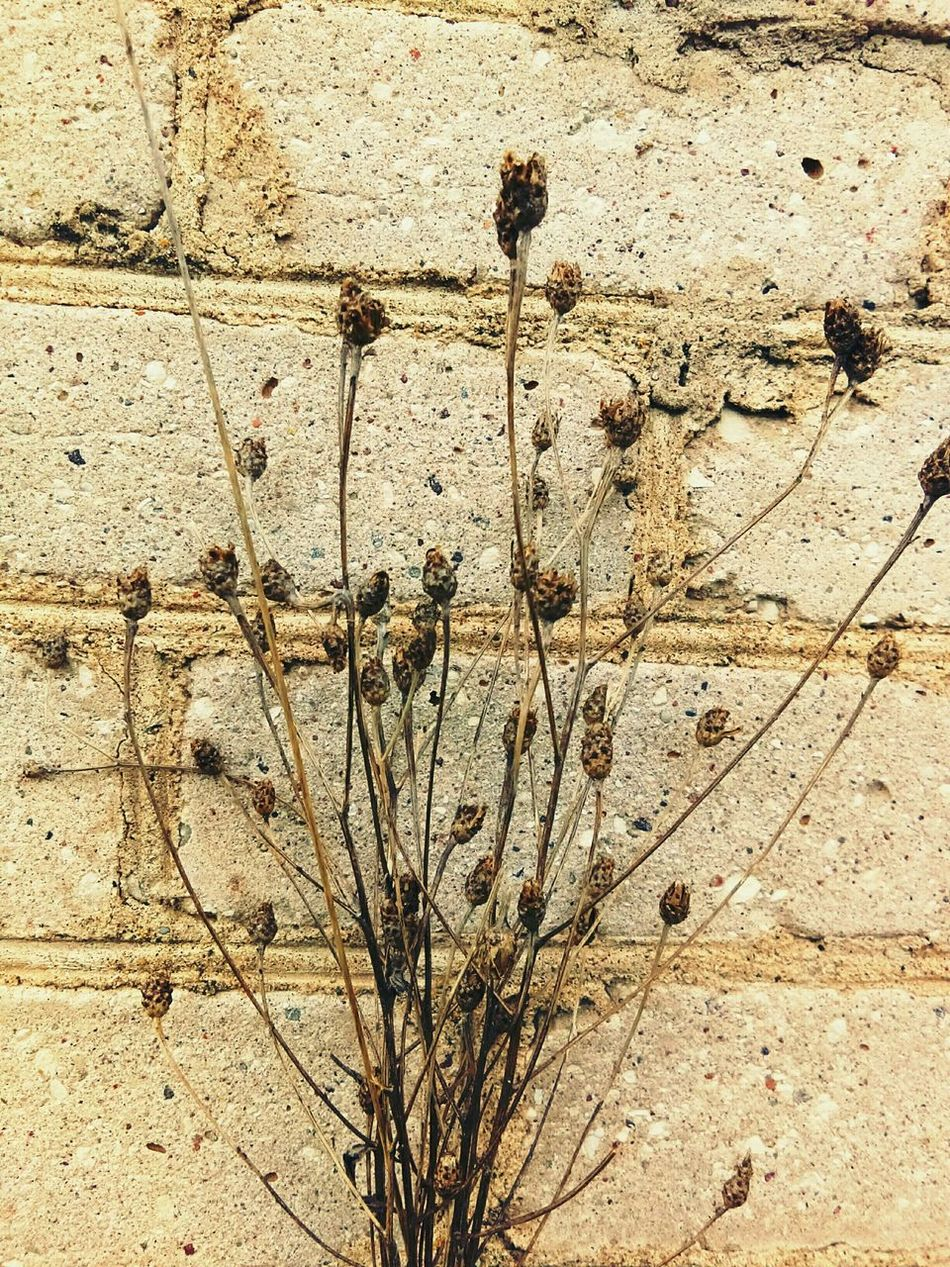 Full Frame Backgrounds Outdoors Textured  No People Day Nature Close-up EyeEmNewHere Beauty In Nature Old Buildings Freshness Flower Head Flower Growth Nature Brick Wall Grass Plant