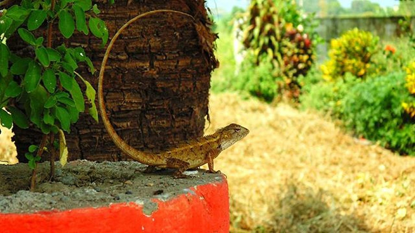 Wanna mess with me eh.. Nature Payattention Chameleon
