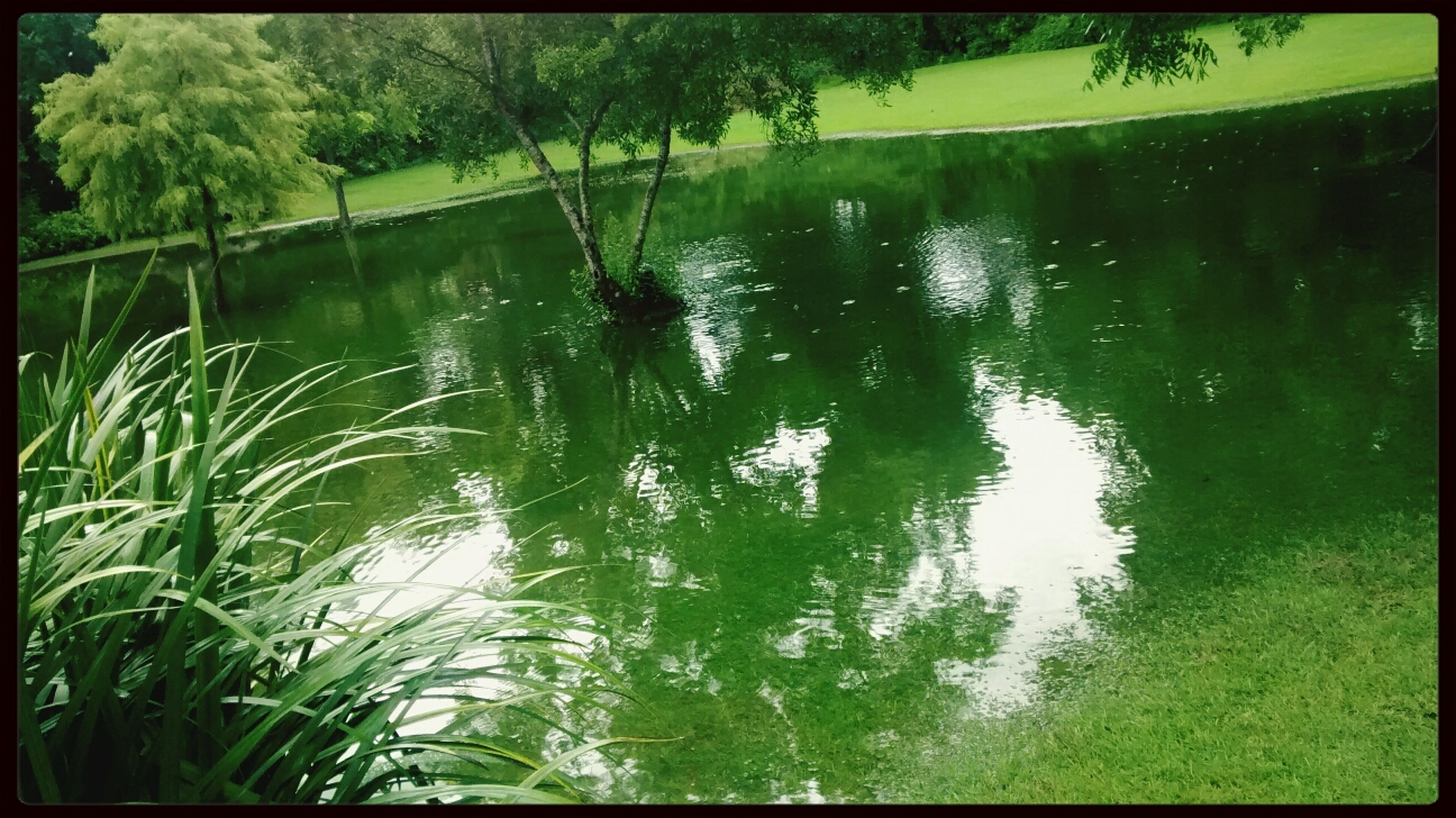 water, transfer print, reflection, tree, auto post production filter, lake, tranquility, nature, green color, pond, growth, beauty in nature, tranquil scene, waterfront, scenics, outdoors, plant, forest, standing water, day