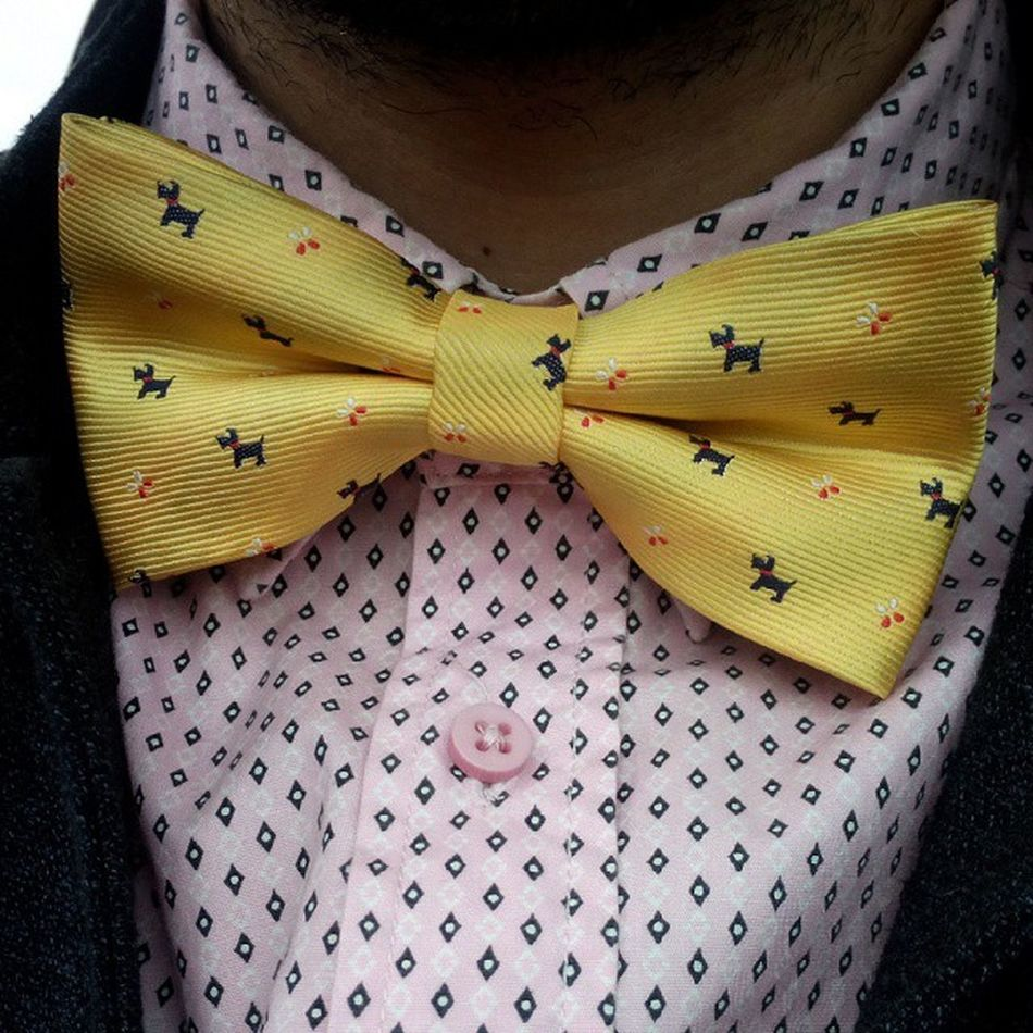 бабочка Bowtie Bow_tie Butterfly жёлтые барбосики it's a doggy_style
