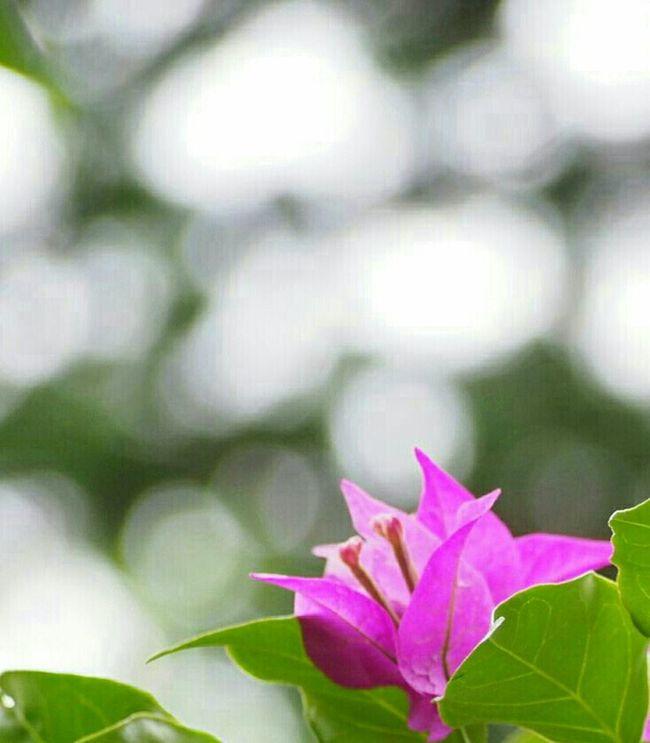 おはようございます😊 Flower ブーゲンビリア Flower Collection Eye Em Nature Lover 玉ボケ今月も頑張りましょう♪