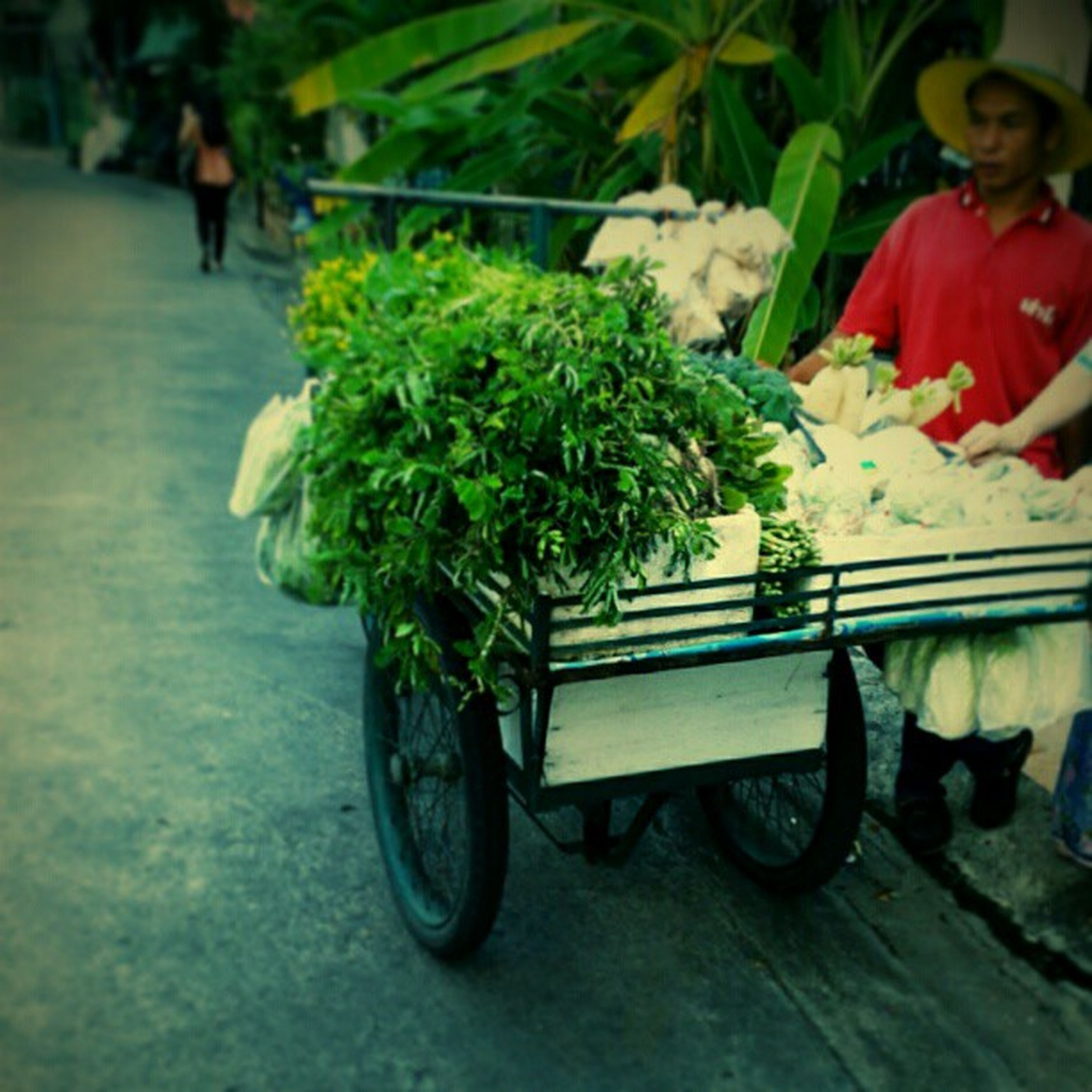 bicycle, transportation, mode of transport, potted plant, land vehicle, flower, street, plant, growth, outdoors, day, incidental people, sidewalk, freshness, road, men, person, lifestyles