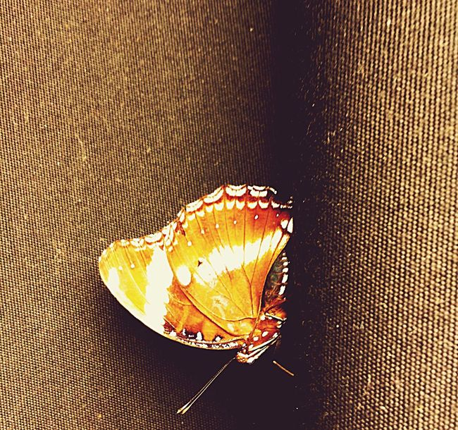 Standby.😍 Close-up Insect Paparazzi Amazing Capture The Moment Kabisera Bonifaciohighstreet BonifacioGlobalCity