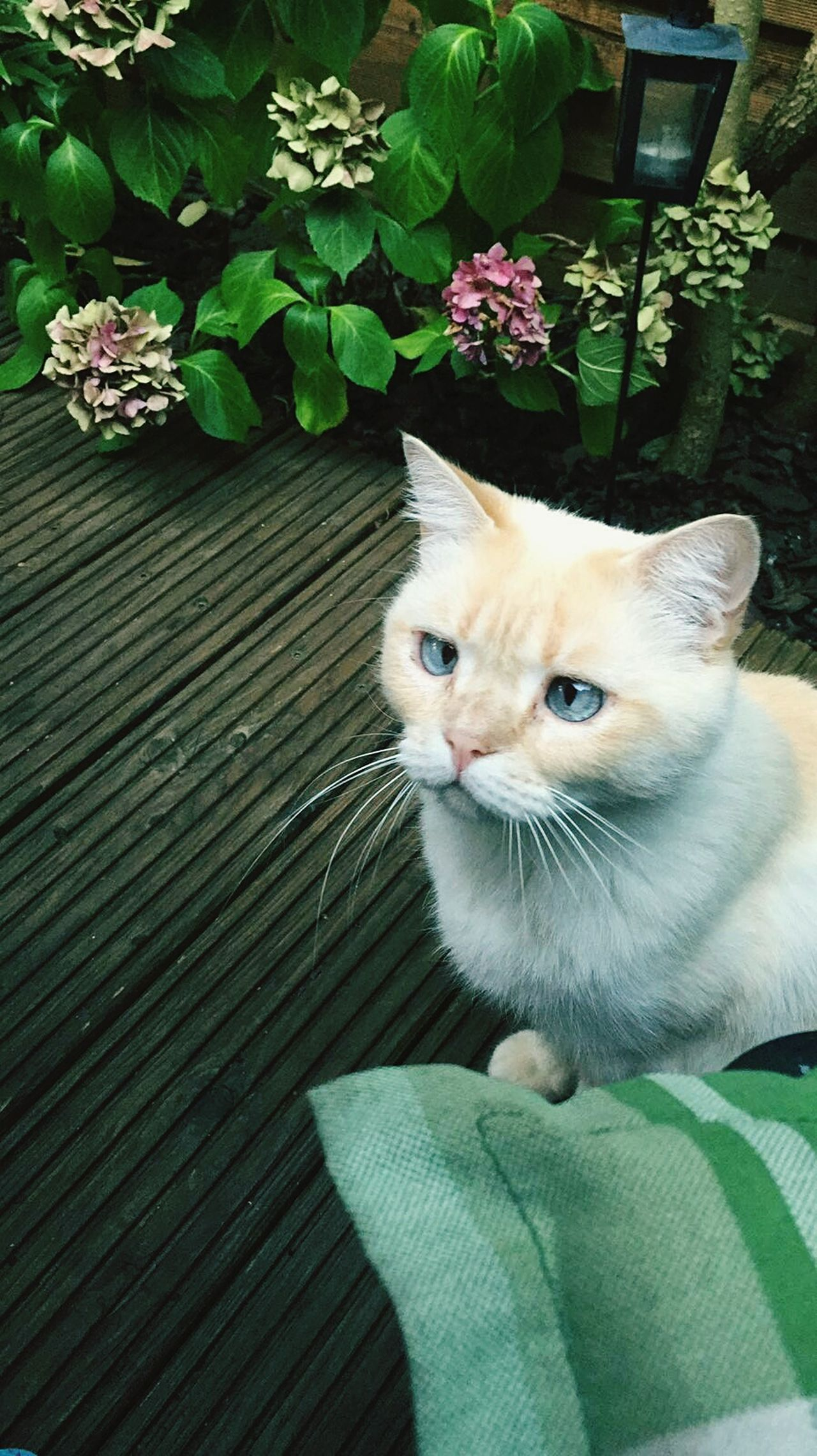 Cat Cateyes One Animal Nature Outdoors No People Cat Domestic Animals Pets Love