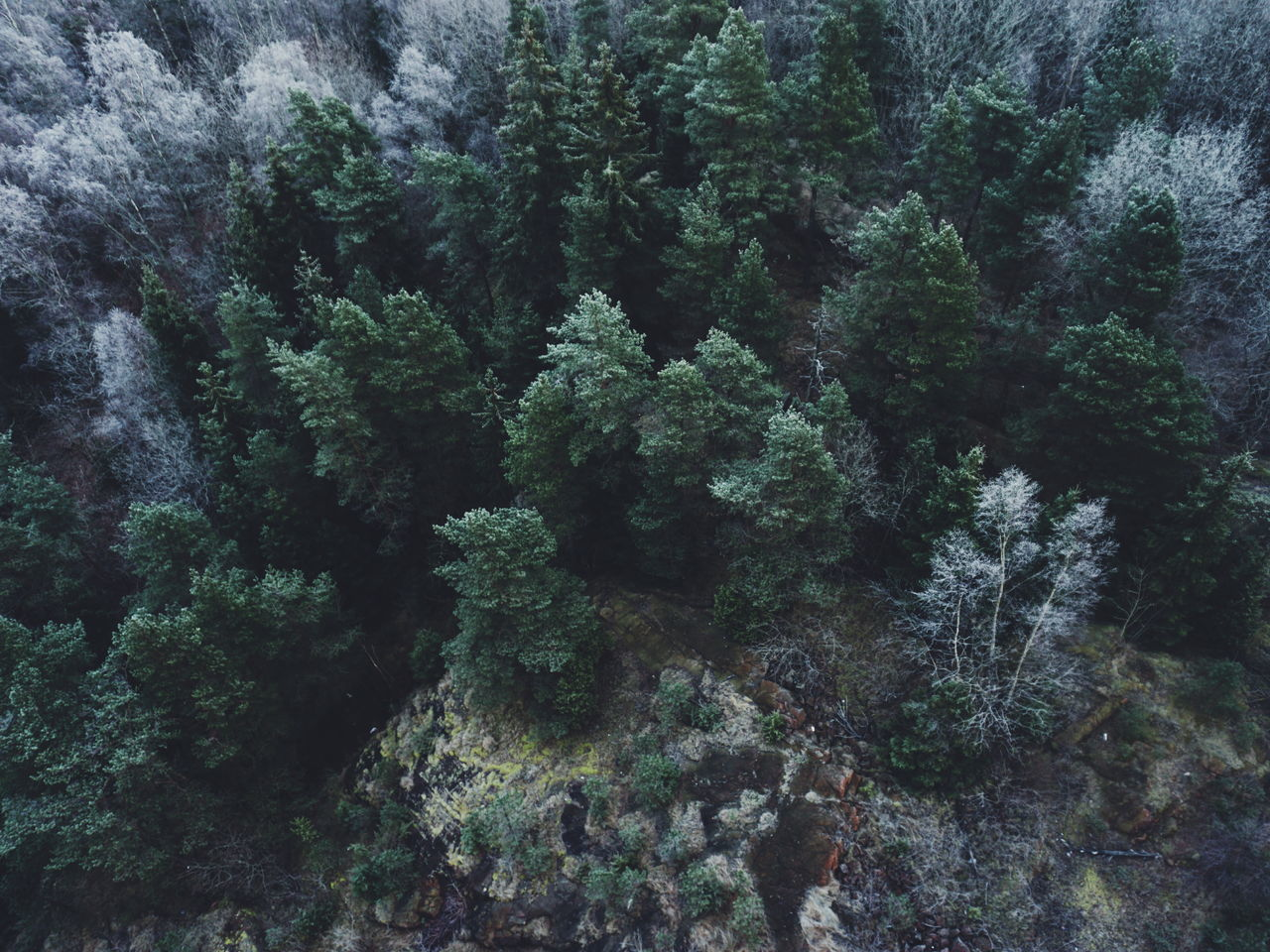 Beautiful stock photos of drones,  Backgrounds,  Beauty In Nature,  Branch,  Close-Up