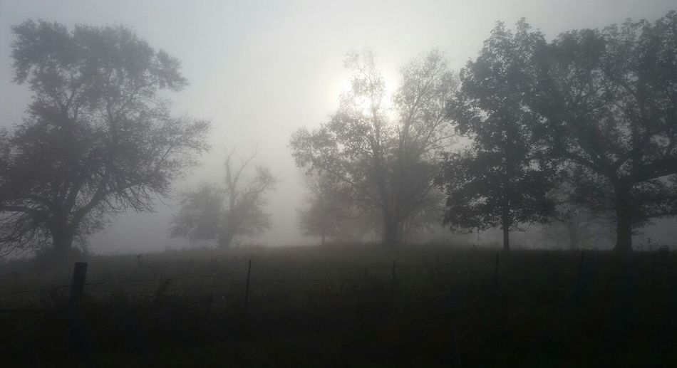 Foggy Day Foggy Morning Foggy Weather Fog In The Trees Foggy Landscape Foggymorning Fog Over Water Fogscape Sunlight And Shadow Eerie Scene Eerie Trees Eerie Tree