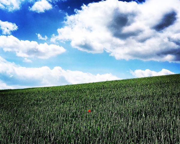 Sky Field Growth Landscape Rural Scene Green Color Beauty In Nature Nature Cloud - Sky Scenics Agriculture Farm Tranquility Tranquil Scene Outdoors No People Grass Day Freshness