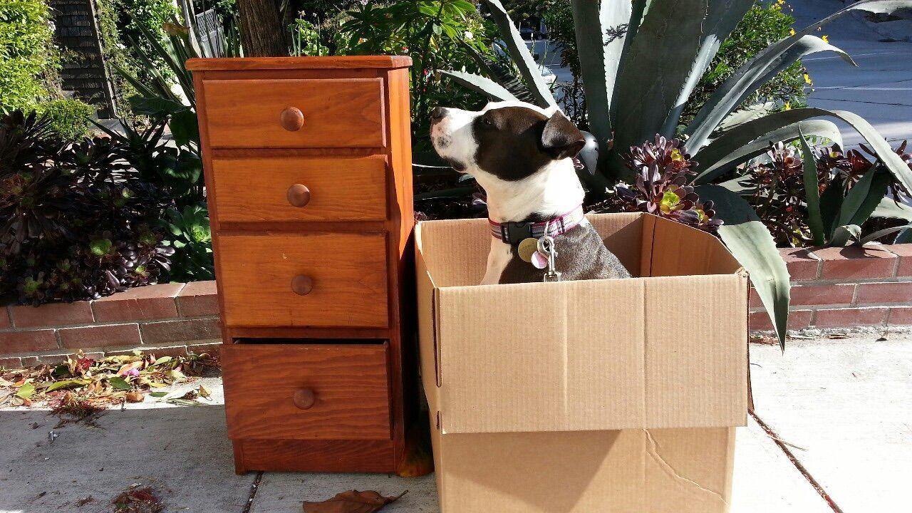 Pets Corner Spoon The Dog Box Dresser Staffy Pitbull