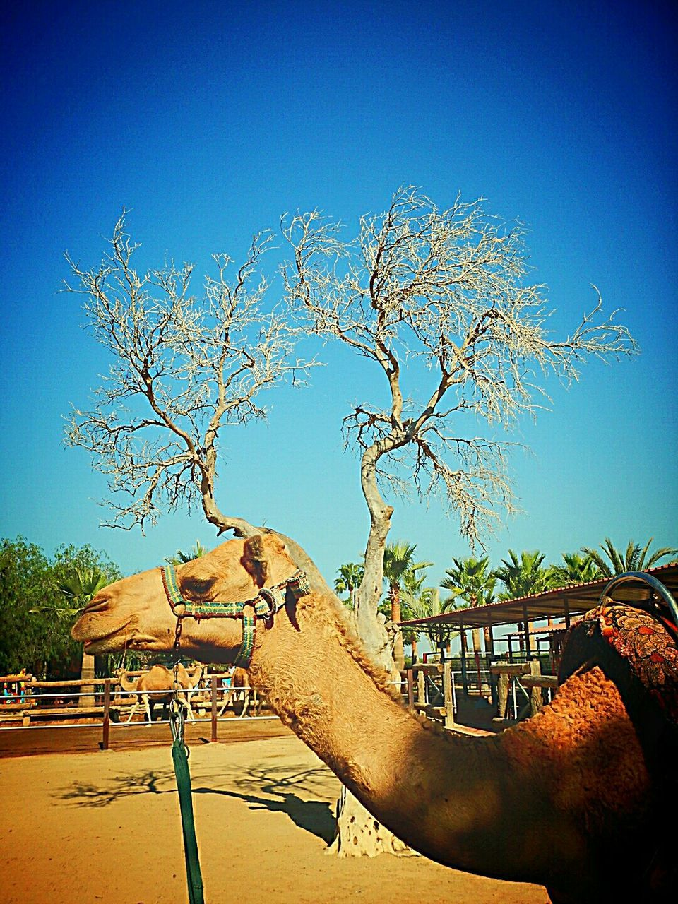 tree, clear sky, outdoors, day, blue, sunlight, animal themes, domestic animals, nature, no people, mammal, architecture, sky