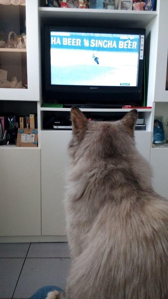 Watching Malesian MotoGp Motogp Relaxing Cat Cats Cat Lovers Malesia Sepang Racetrack Sunday SundayFunday