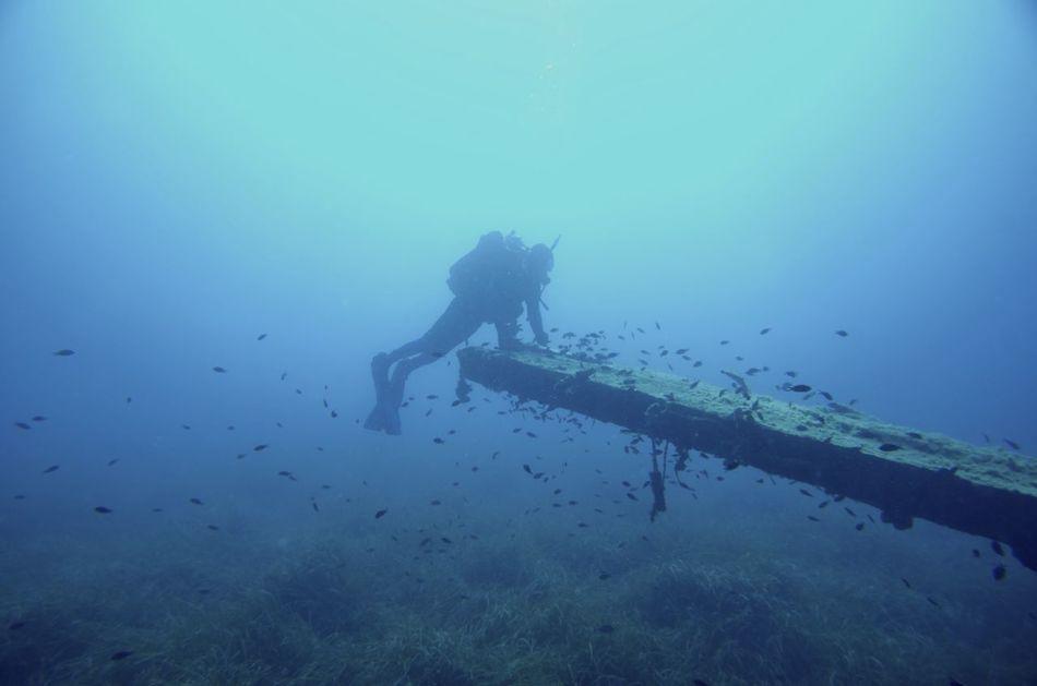 Beautiful stock photos of wildlife, Ruined, animals In The Wild, aqualung - Diving Equipment, aquatic Sport