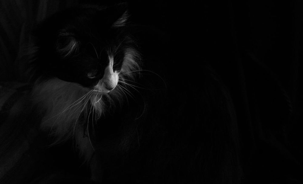 Low light capture. Black & White Bw_collection EyeEm Best Shots Cats Of EyeEm Monochrome Monochrome Photography Bw_lover Studio Shot EyeEm Best Shots - Black + White Bw_photooftheday AMPt_community Eye4photography  Animals Blackandwhite The Week Of Eyeem Adapted To The City