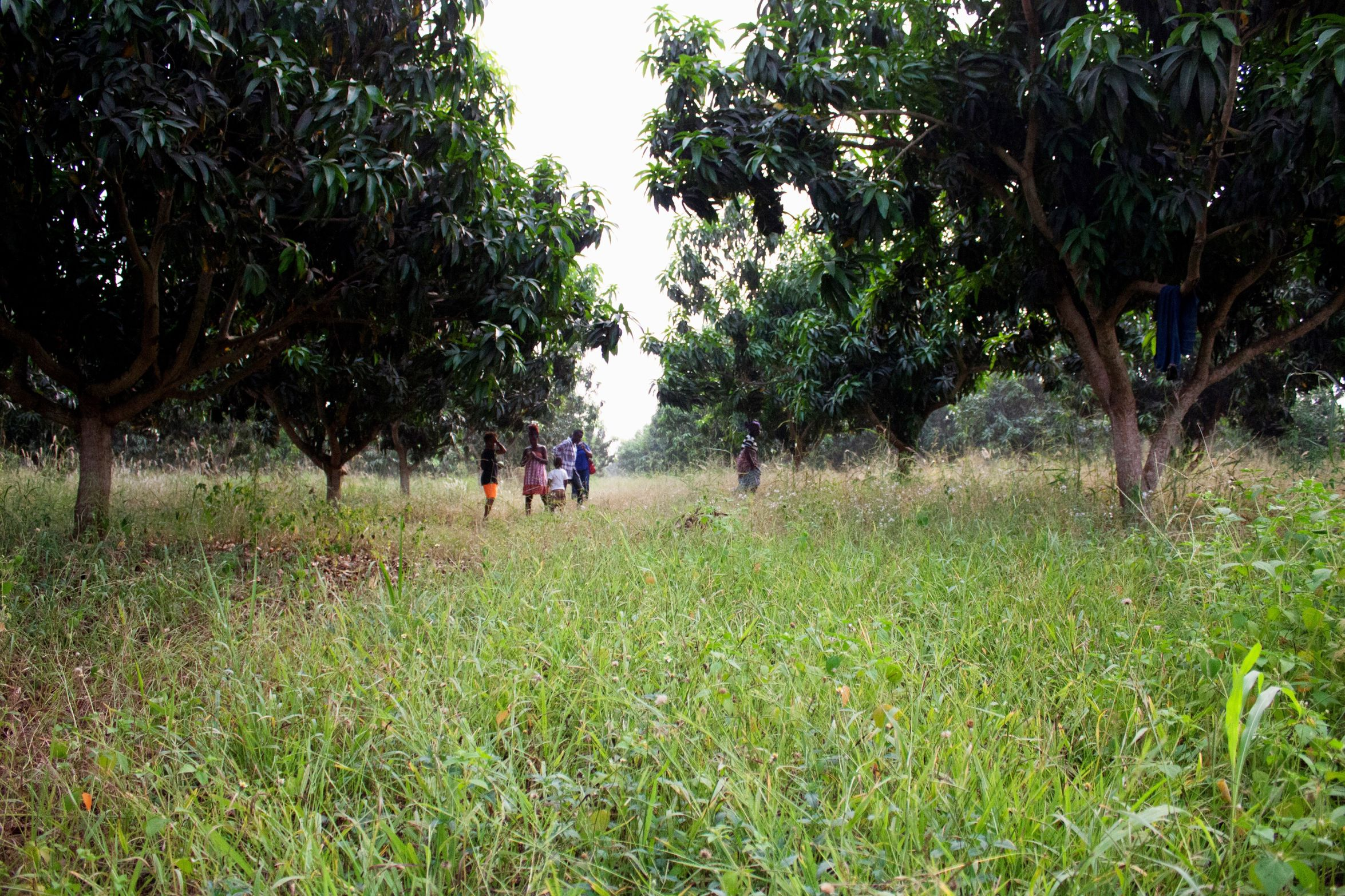 Grandmas Mangofarm Mango Mangos Farm Mangofarm Ghana In Love With IT Sogakofe Grandma Grandmother Future ♥