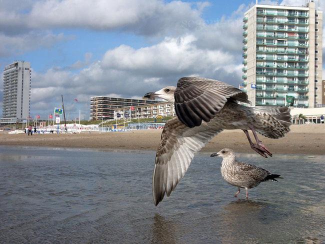 Strandlicht Zandvoort Perspectives Vacances Mövenflucht vor architektonischer Glanzleistung.
