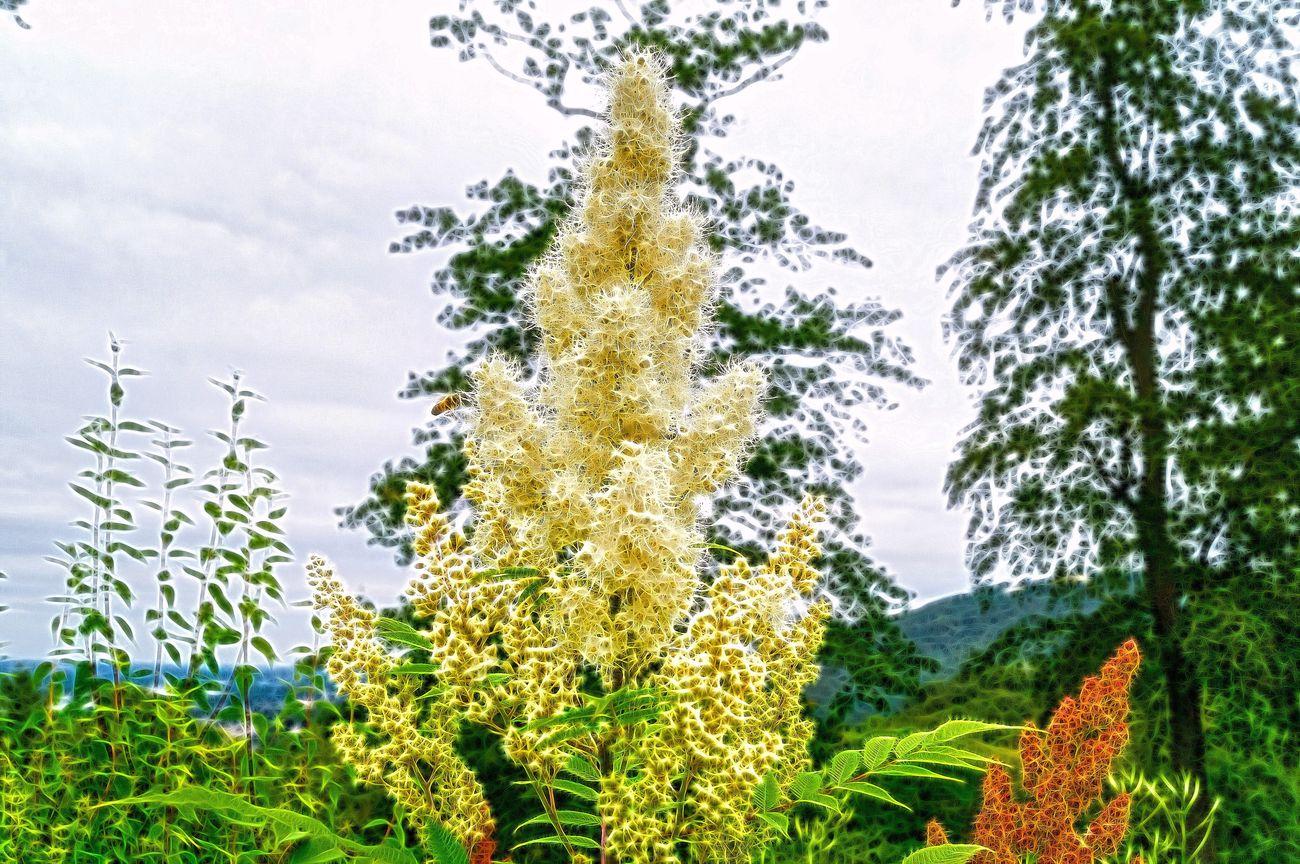 Flowers Flower Flowerporn Flowers,Plants & Garden Plant Plants And Flowers Plants Plants 🌱 Nature Photography Nature Nature On Your Doorstep