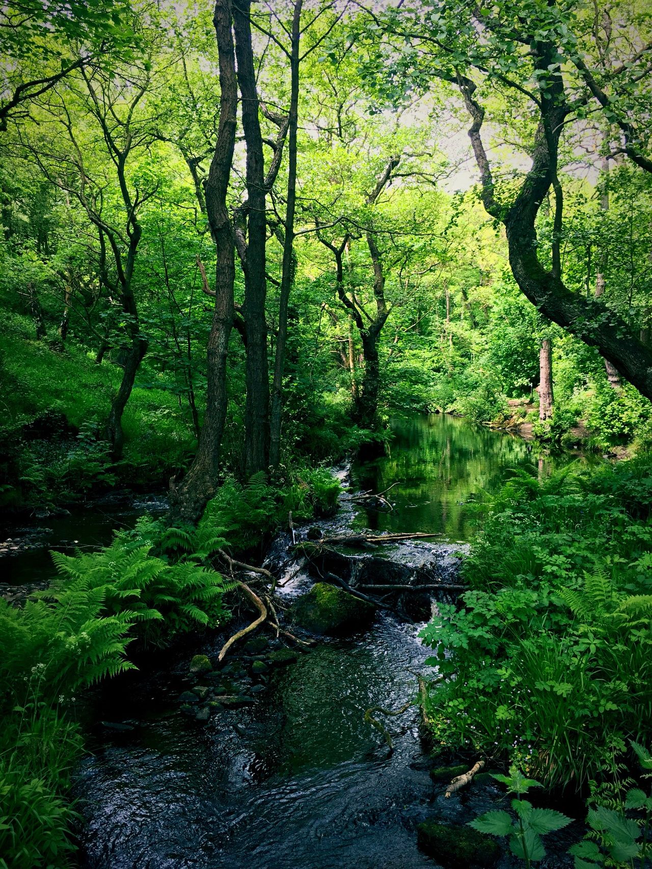 How green is my valley ? Tree Nature Forest Tranquil Scene Beauty In Nature Lush Foliage Tranquility Scenics Water Outdoors Idyllic Green Color Landscape Vacations River Travel Destinations Moss No People Outdoor Pursuit Deciduous Tree Rivelin Valley