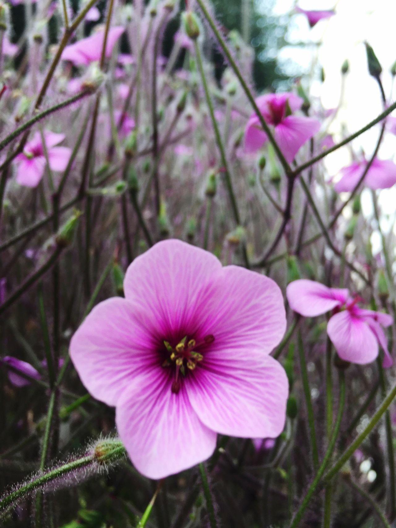 Flower Garden Flowers