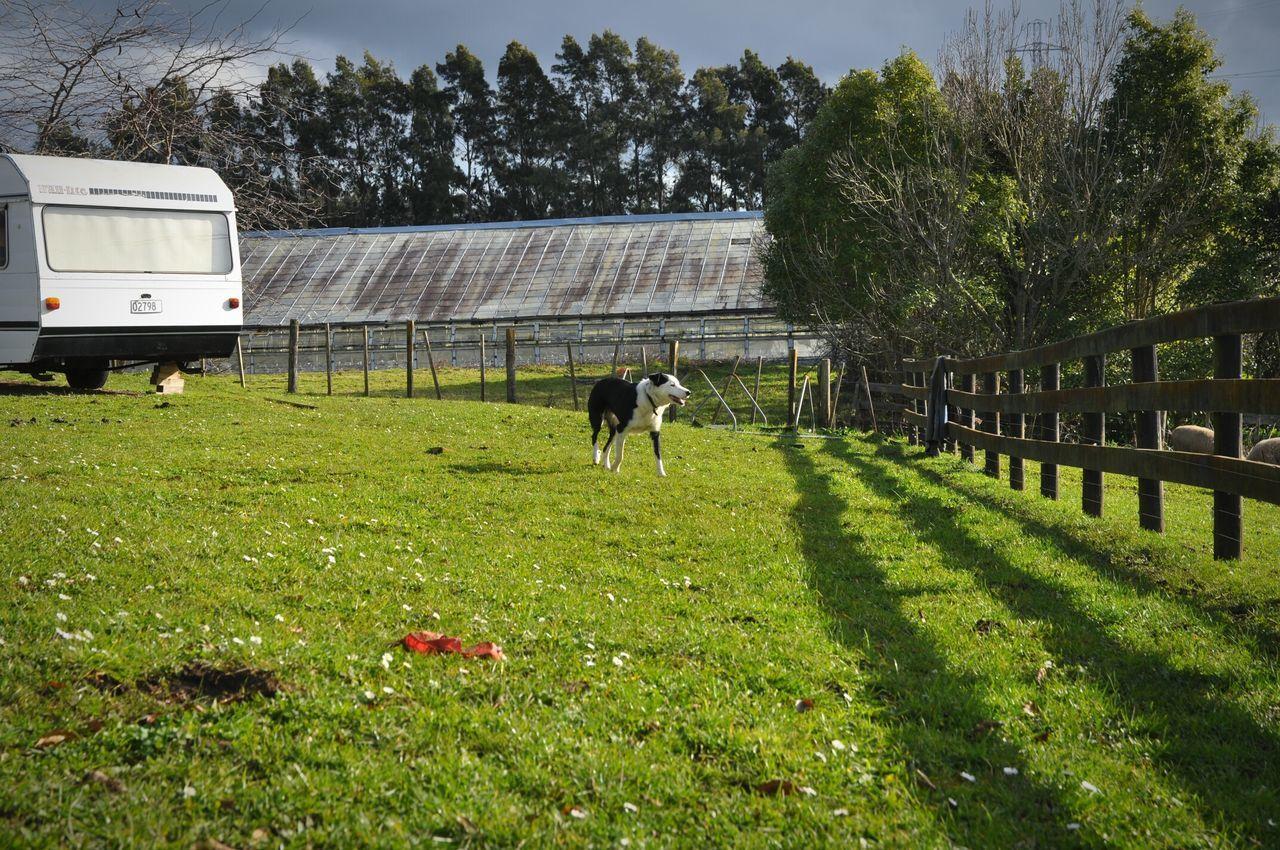 Dog Sheepdog Farm Light And Shadow New Zealand Snapshot Open Edit OpenEdit Sunlight Cloud - Sky Sheep Farm Newzealand