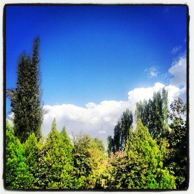 Bekaa Trees Beautiful Weather