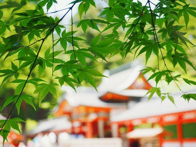 Kirishiama Jingu The Fresh Green Kirishima City Kagoshima,japan 霧島神宮