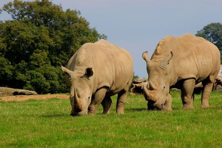 Animal Themes Animals In The Wild Safari Adventure England🇬🇧 Animal Animal Photography Animals In The Wild Safari Park Safari Animals Animalphotography Safari Animals