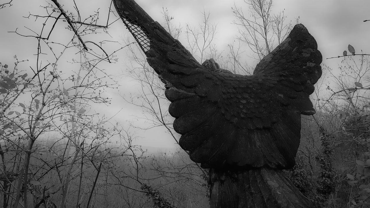 Depression - Sadness Silhouette Sky Blackandwhite Black & White Black And White Photography Gloomy Sadness Eagle Statue Spooky Photo Spooky Places Spooky Statue Lookout Mountain Tn EyeEmNewHere Foggy Landscape Light And Shadow Amazing Awesome_shots #photoedit #photowall #picoftoday #photooftheday #ipopyou #instagamous #beautiful tranquil sceneBeauty Angles And Views instagramhub igaddict jj_for Awesome Nature Tennessee Chattanooga Tennessee