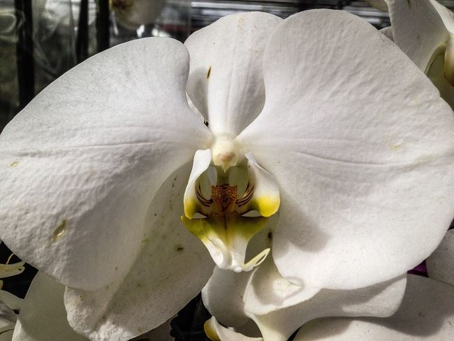Flowers EyeEm Best Shots Eye4photography  Orchids