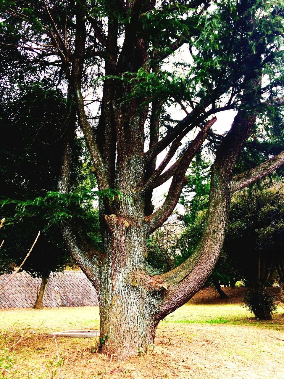 tree, tree trunk, nature, growth, branch, tranquility, day, beauty in nature, outdoors, no people