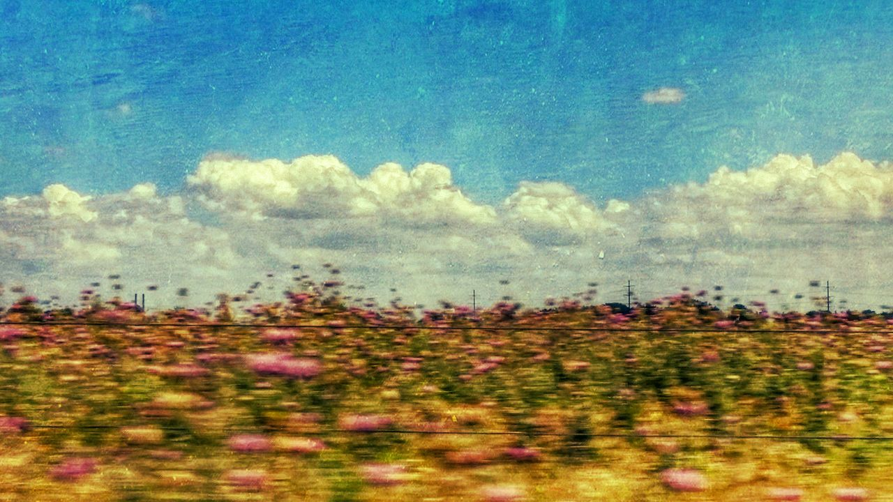 Beauty In Nature Day Drivebyphotography Nature No People Outdoors Plant Scenics Sky