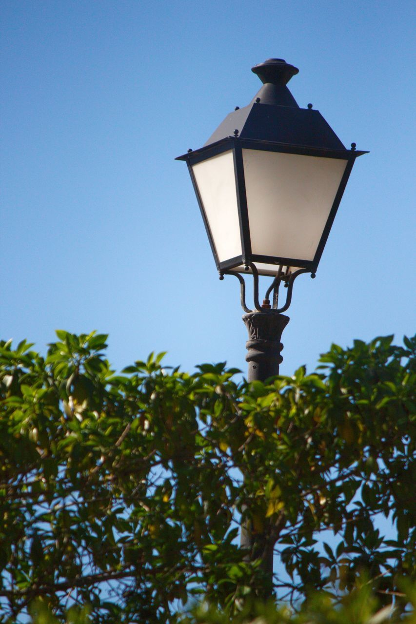 lighting equipment, low angle view, street lamp, street light, gas light, no people, outdoors, clear sky, growth, tree, illuminated, day, nature, architecture, bird, sky, perching, animal themes