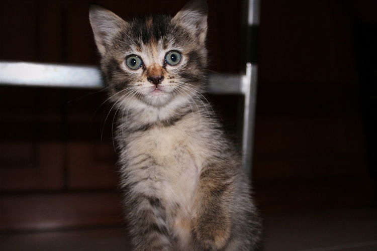 Huh?! Animals Cat Cat Lovers Pets Shocked Face Shock Animal Themes Animal Photography Animal_collection One Animal Close-up My Friend