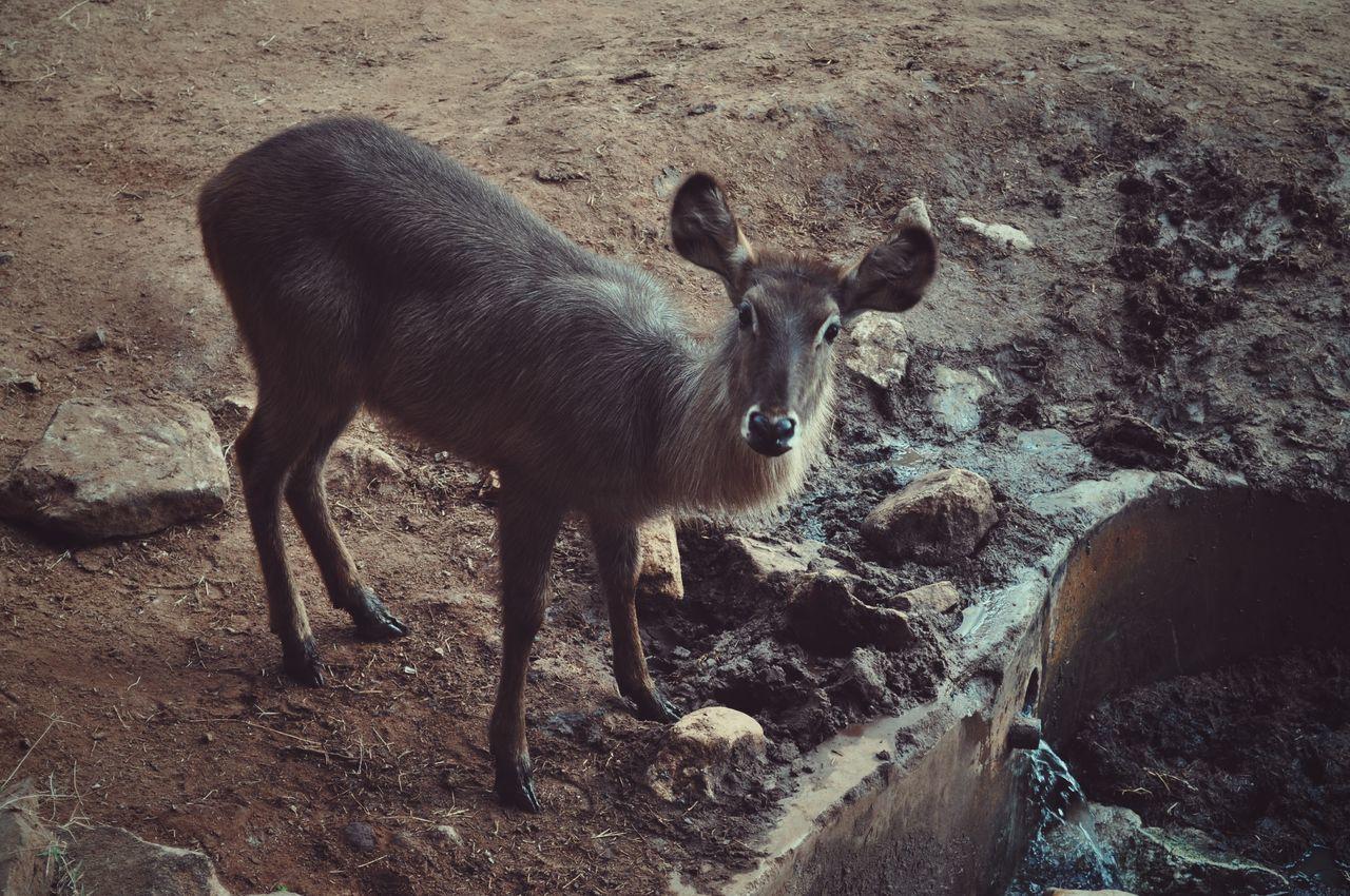 Taita Hills, Kenya. Animal Themes One Animal Nature Animals In The Wild Taitahills Kenya Adventure EyeEm Best Edits Africa Travel EyeEm Best Shots VSCO Tsavo Safari Travel Destinations Beauty In Nature Animal Wildlife Animal
