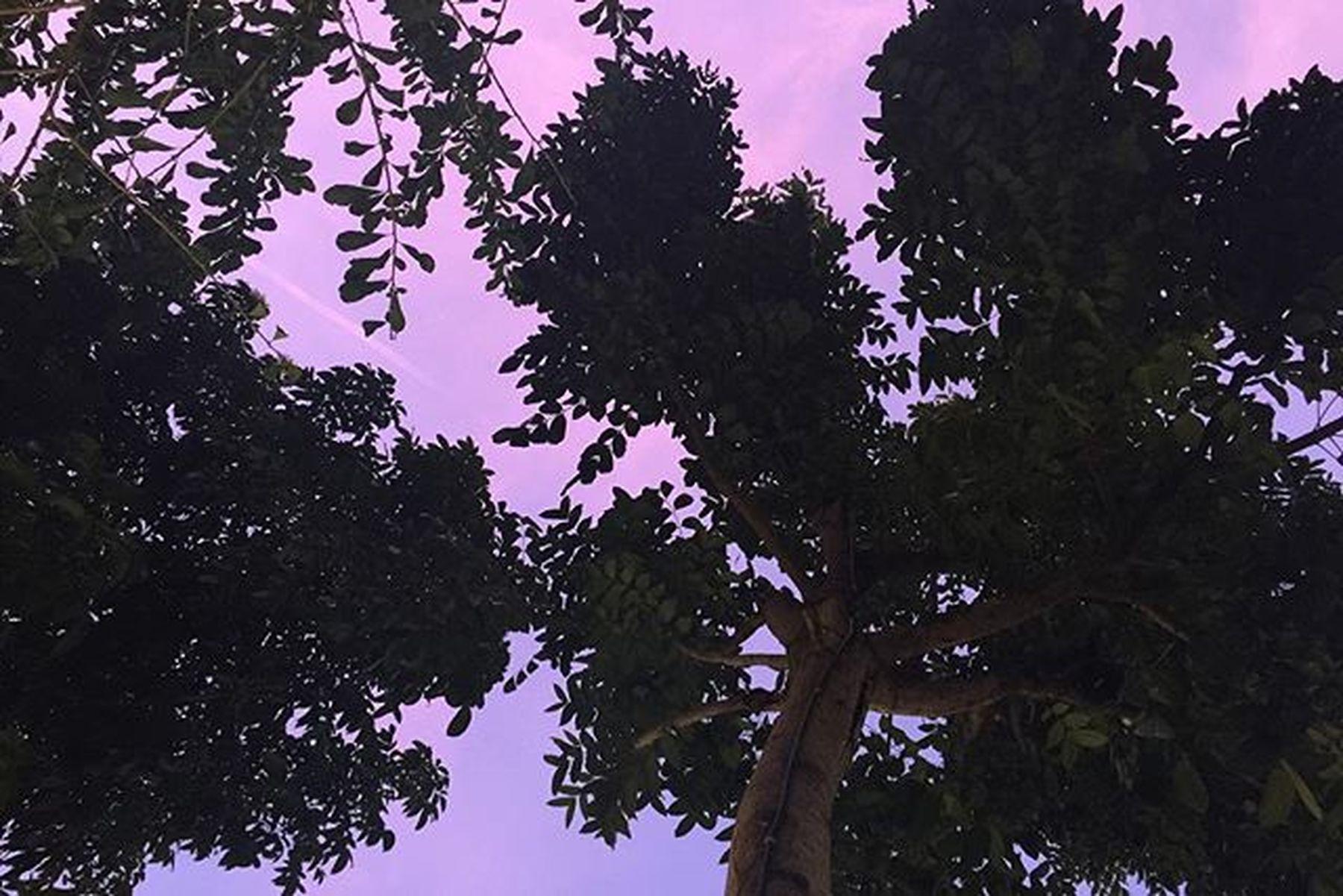 ม หั ส จ ร ร ย์ ธ ร ร ม ช า ติ | ท้ อ ง ฟ้ า สี ม่ ว ง 💜 💜 💜 Nature Sky Violet Nofilter😍