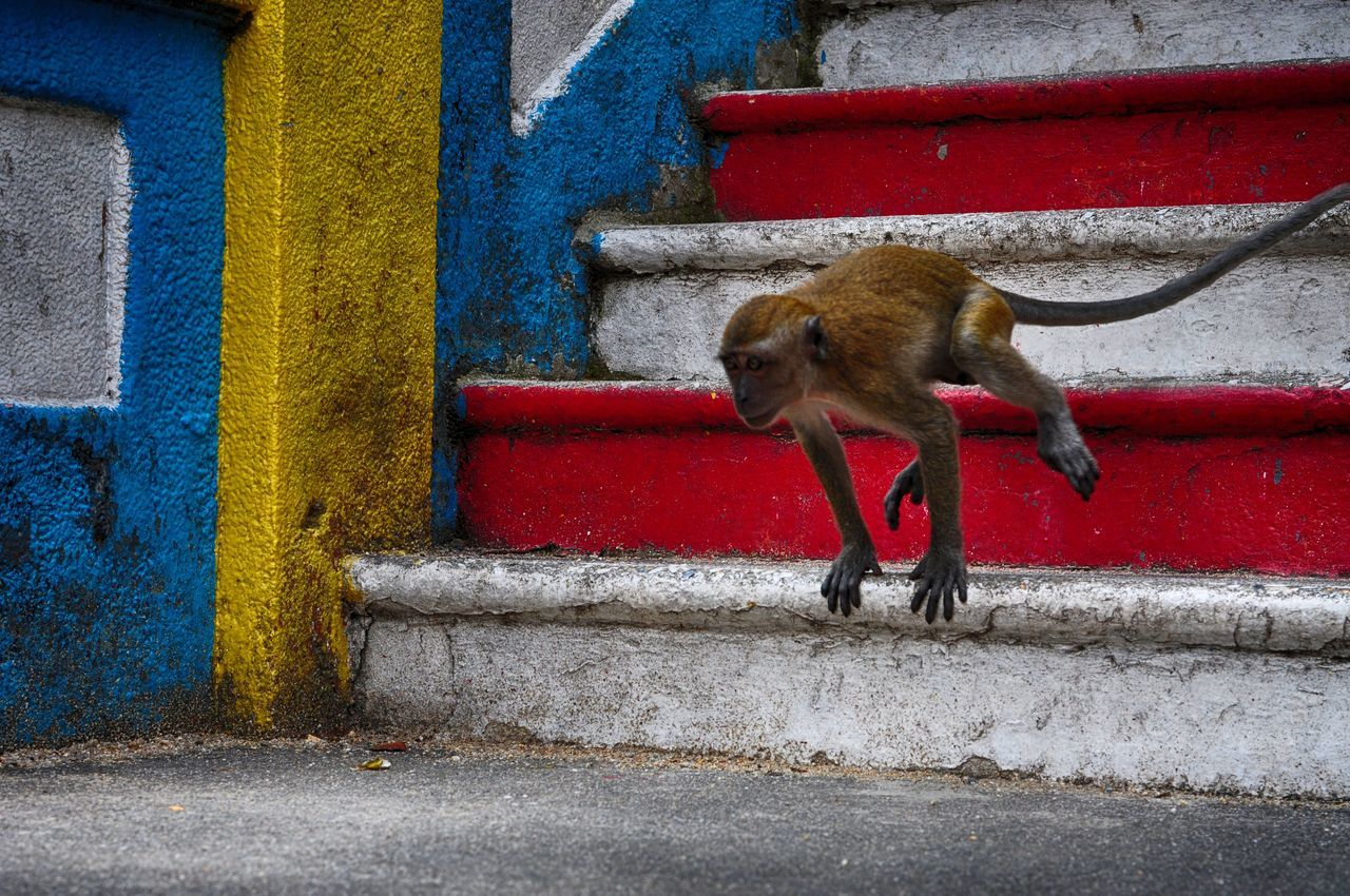 The Great Outdoors – 2016 EyeEm Awards Taking Photos Monkey Monkey Business The Photojournalist - 2016 EyeEm Awards Check This Out Life Travel