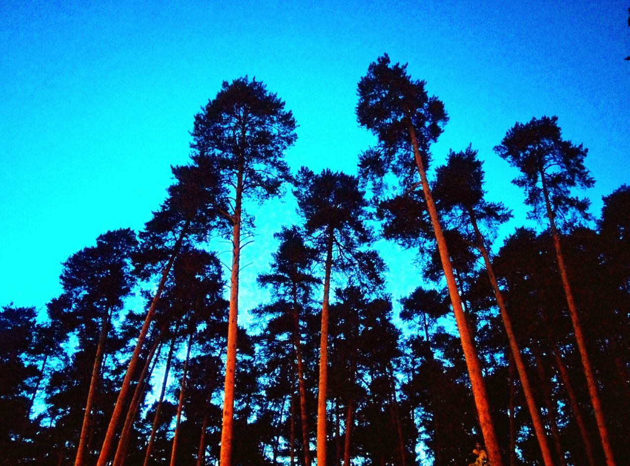The forest of pines. First Eyeem Photo