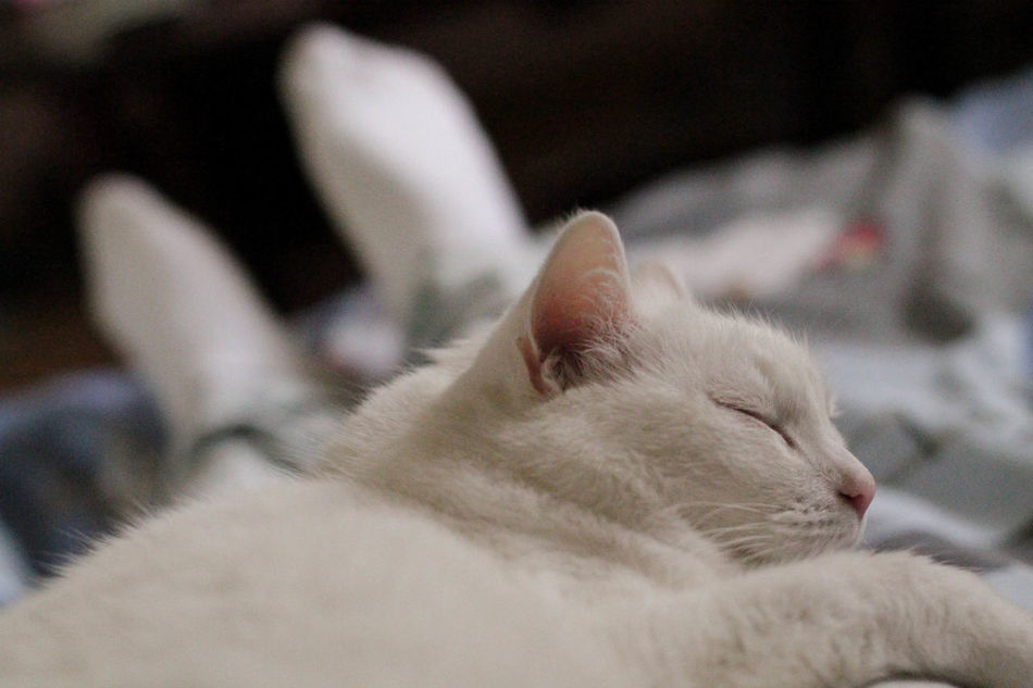 Animal Themes Cat Close-up Cozy Cozy At Home Cozy Moments Cozy Place Day Domestic Animals Domestic Cat Feline Finland Finland Summer Indoors  Love No People One Animal Pets Relaxation Sleeping