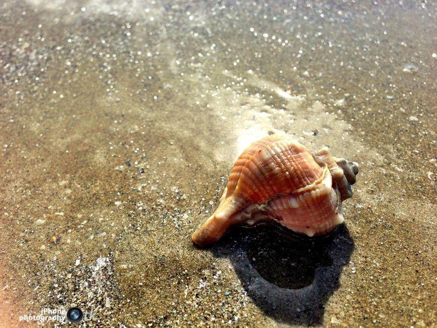 Sea Beach Seashell