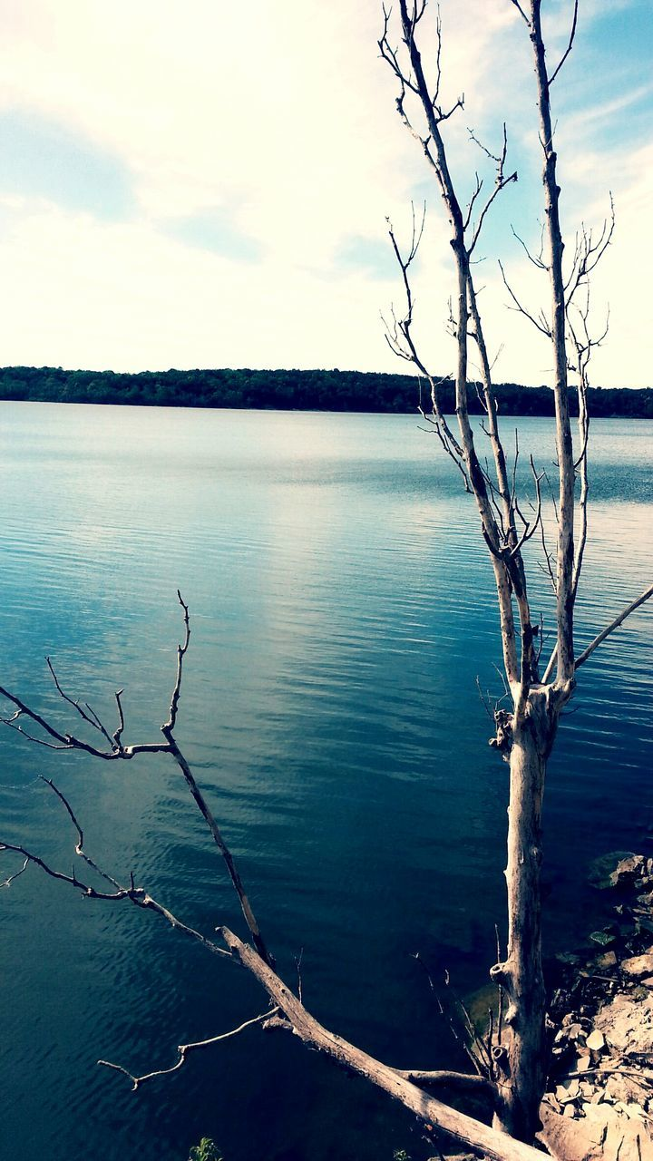 tree, sky, nature, tranquility, beauty in nature, bare tree, tranquil scene, water, outdoors, branch, no people, scenics, lake, day, lone, dead tree