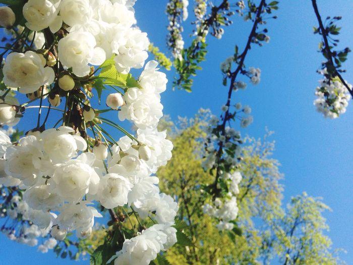 Freshness Springtime Spring Flowers Spring 2016 Saturday Afternoon