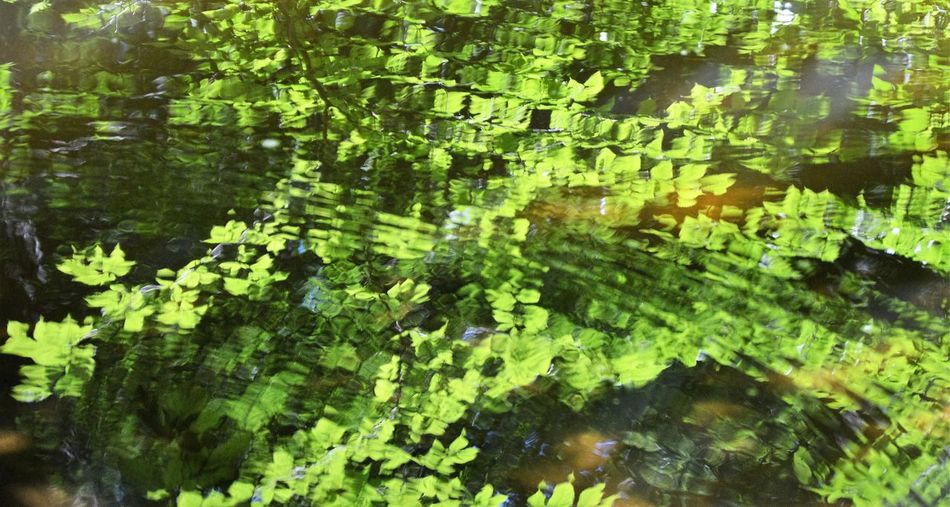 Trees reflected in water Abstract Nature Abundance Backgrounds Beauty In Nature Green Green Color Growth Leaf Leaves Leaves Reflected In Water Lush Foliage Nature Outdoors Plant Reflection Scenics Standing Water Tranquility Water