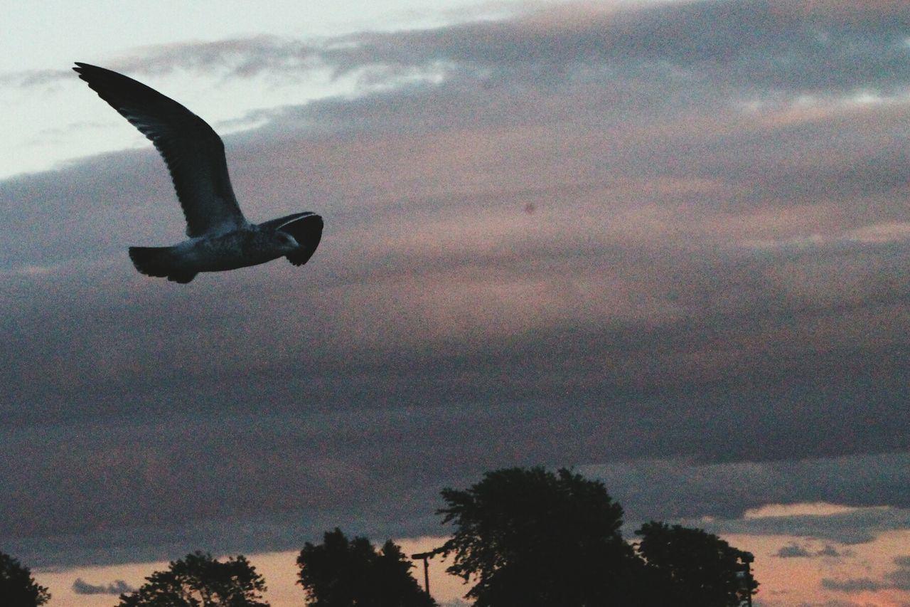 Leaminton Marina Seagull At Dusk