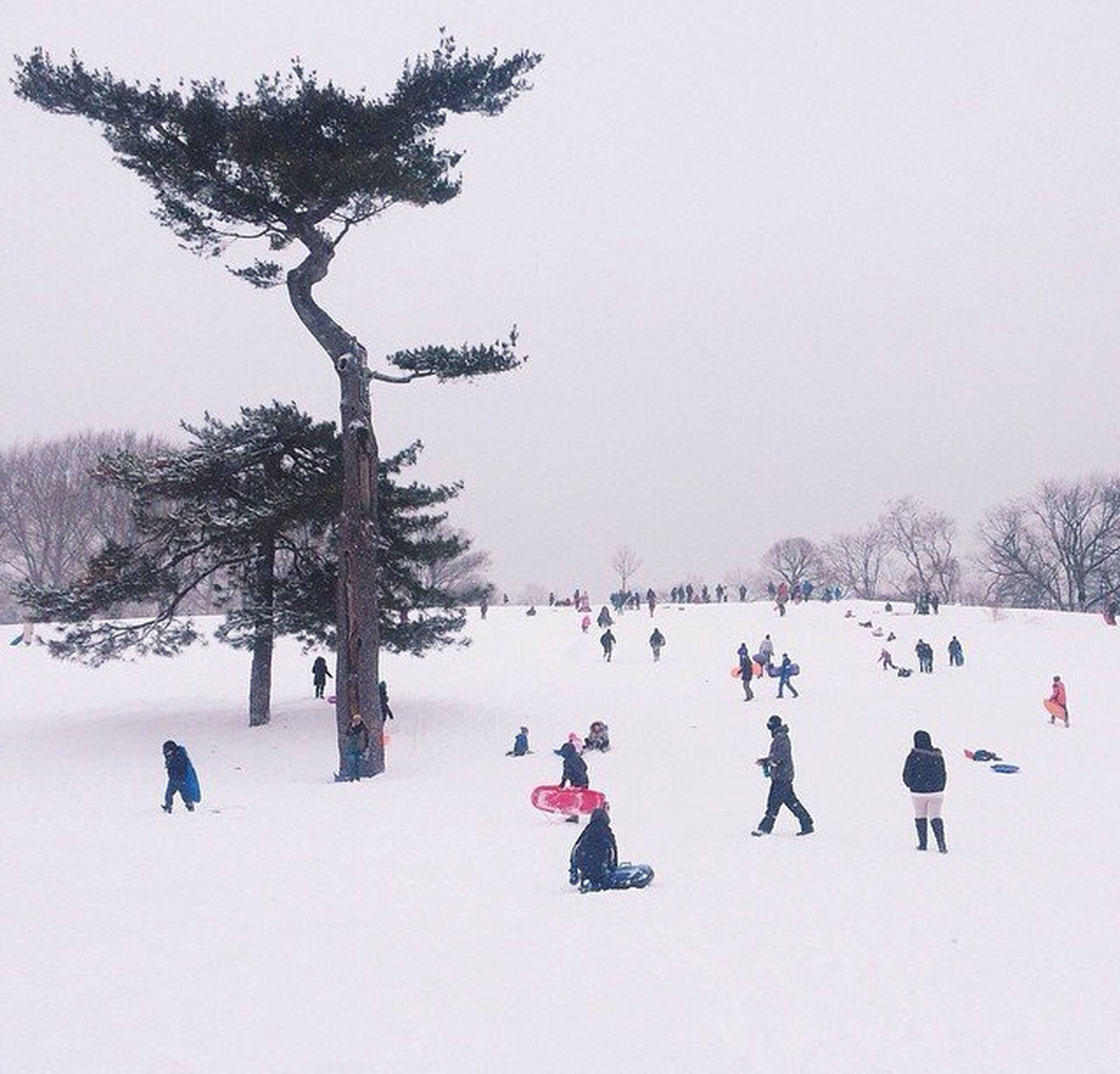 snow, winter, cold temperature, season, weather, tree, leisure activity, lifestyles, clear sky, landscape, large group of people, men, nature, covering, vacations, tranquility, field, copy space, enjoyment